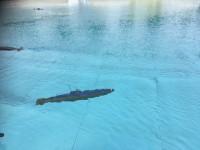 U-Boote im Freibad